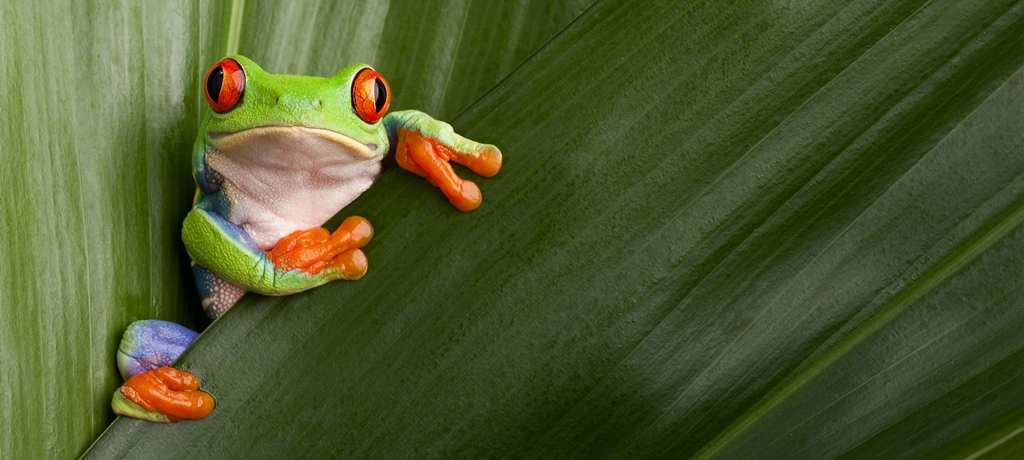 Diversity of Flora and Fauna in Costa Rica