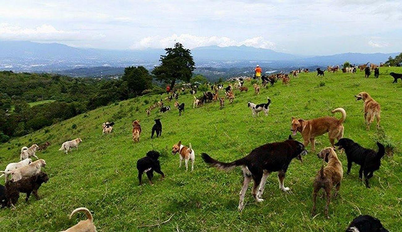 Costa Rica & Pets