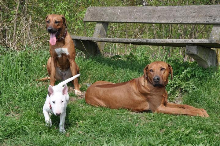 Territorio de Zaguates – A Stray Dog Sanctuary (Donations needed)