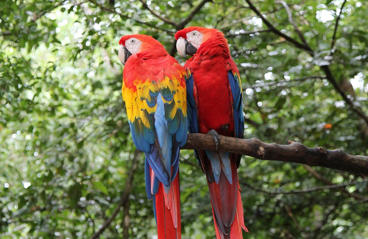 Costa Rica Valentines