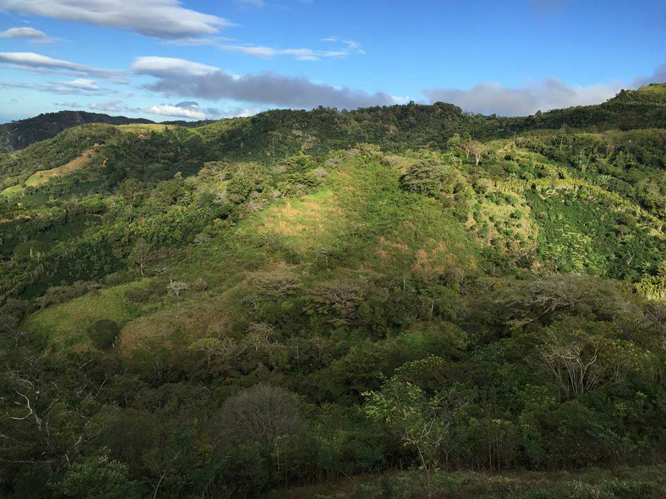 finca for sale in san ramón costa rica, coffee farm in central highlands, 18 acre estate for sale in costa rica, san ramon, central highlands, mountain home with ocean views, investment property, eco-development property,