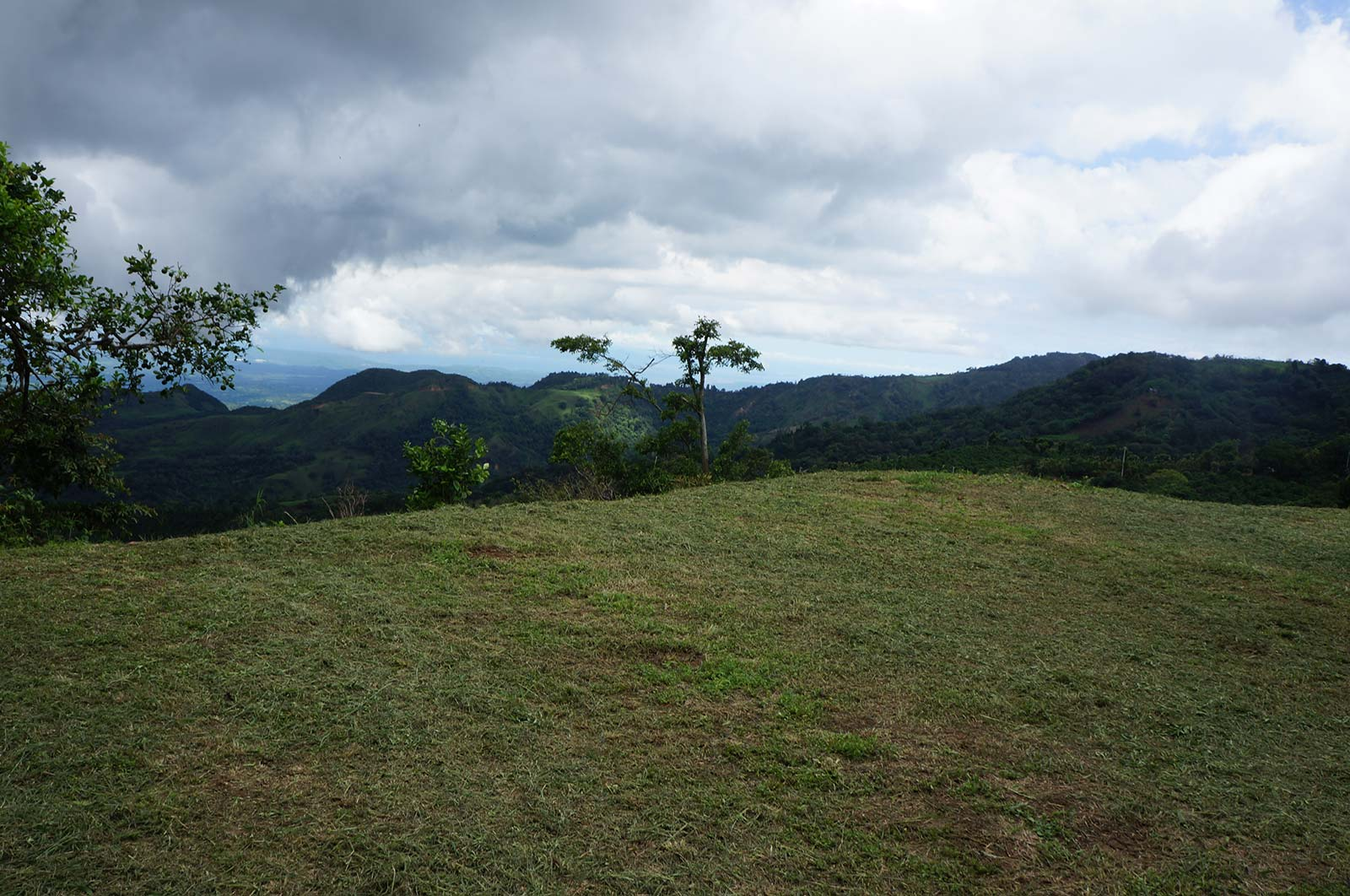 hectares,property,specialty, coffee plantation,plants,lots,located,mountains
