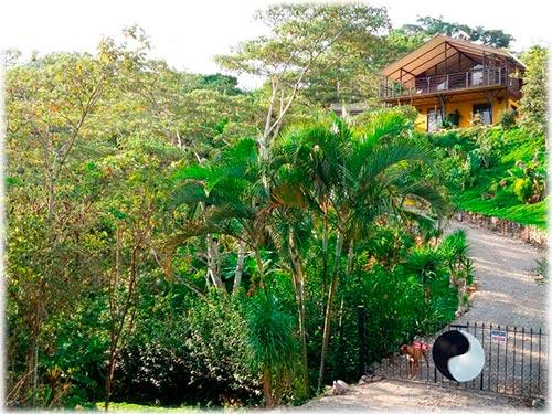wildlife, sanctuary, monkeys, creek, water, landscape, house, coffee farm, birds, nature, forest, jungle, views, mountains, fruit, trees, seeds, flowers
