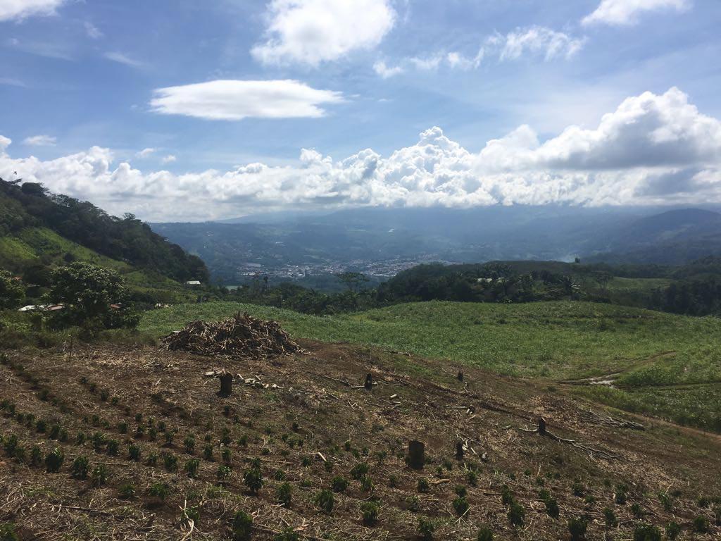 Coffee plantation for sale in Costa Rica