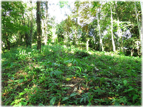 land for sale, for sale, income generating, uvita real estate, lots, south pacific