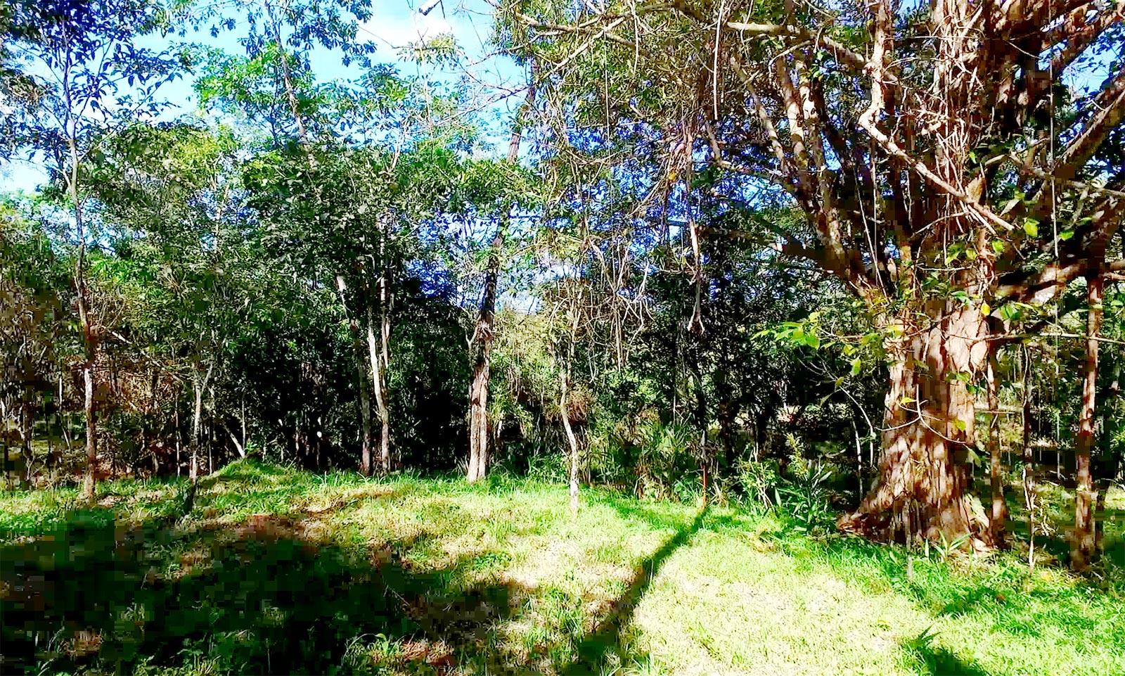 Owner Financed Properties For Sale In Costa Rica