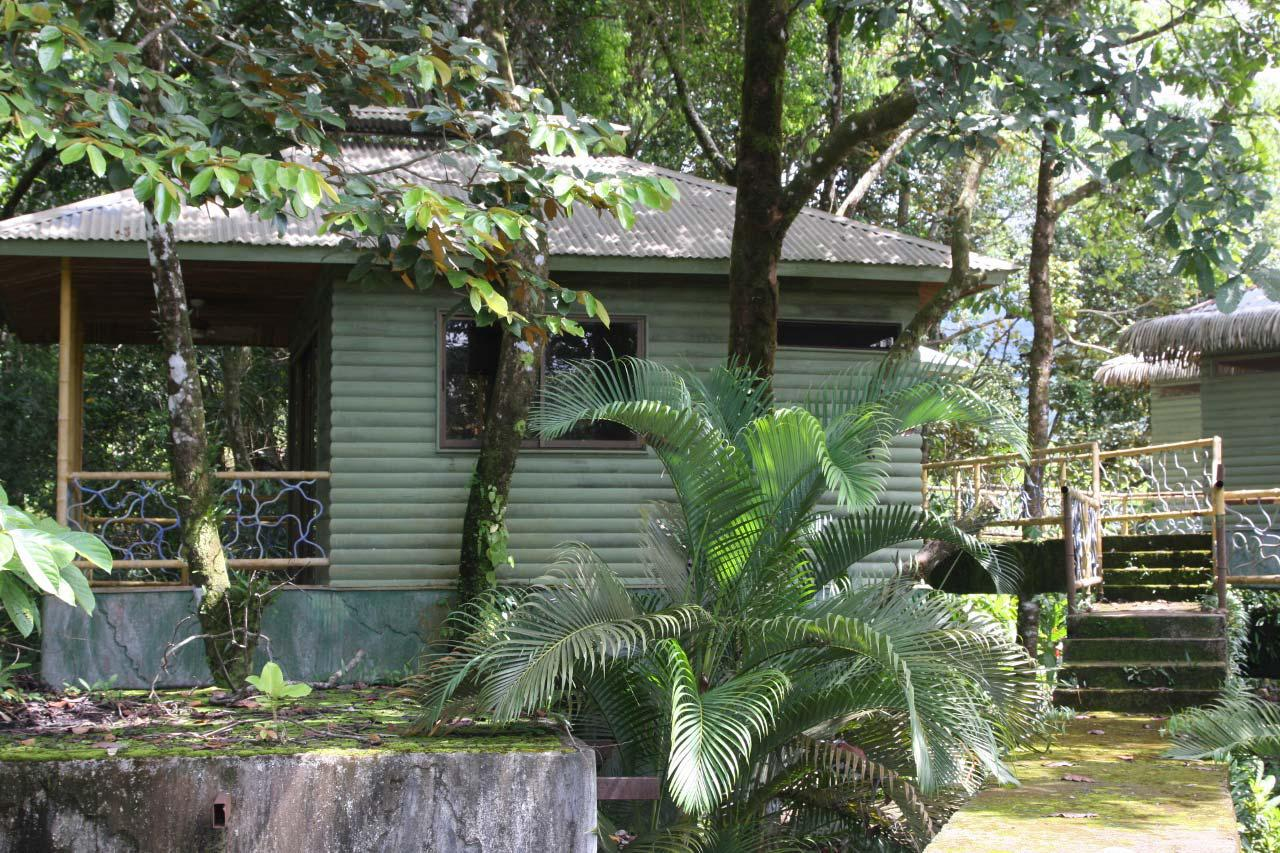 Uncategorized Houses In The Jungle mountain houses surrounded by jungle id code 2951 real state for sale house tree south pacific estate