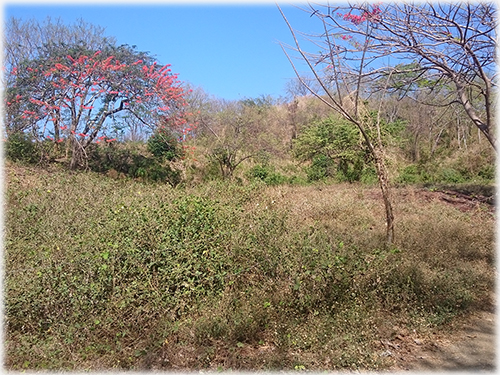 land for sale, beach properties, north pacific, guancaste real estate, development, investments